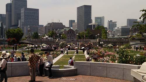 中之島バラ園3.jpg